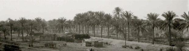 A date plantation near Baghdad Contonment, Iraq, ca. 1932, taken by my grandad