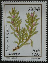 Algeria - Ajuga iva, 1992