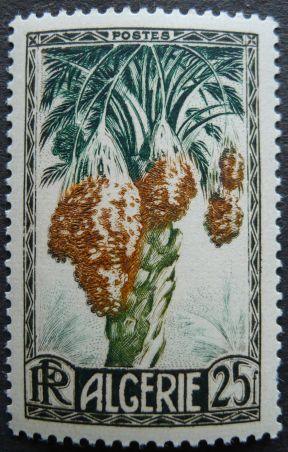 Algeria - date, Phoenix dactylifera, 1950