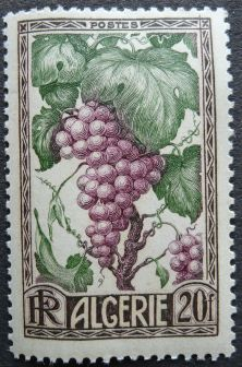 Algeria - raisin grape, 1950