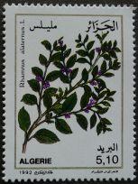 Algeria - Sea Buckthorn, Rhamnus alaternus, 1992
