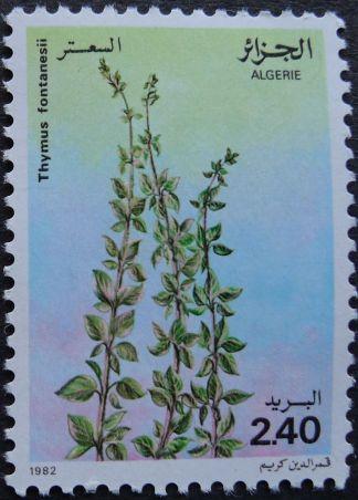 Algeria - Thymus fontanesii, 1982