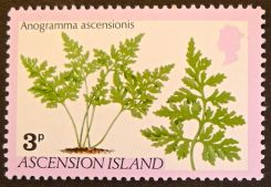 Ascension Island - endemic flora - Anagramma ascensionis