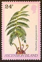 Ascension Island - endemic flora - Marattia purpurea. A representative of a truly ancient plant line