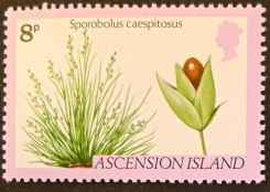 Ascension Island - endemic flora - Sporolobus caespitosus