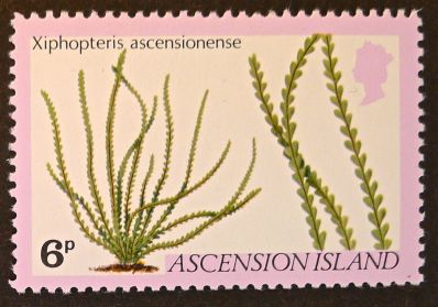 Ascension Island - endemic flora - Xiphopteris ascensione