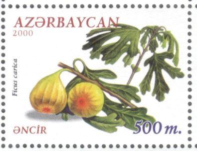 Azerbaijan - fig, Ficus carica, 2000