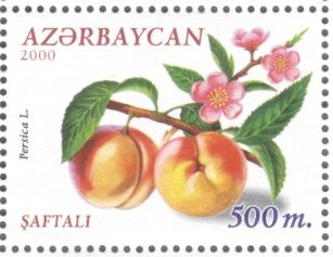 Azerbaijan - peach, Prunus persica, 2000