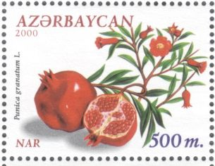 Azerbaijan - pomegranate, Punica granatum, 2000