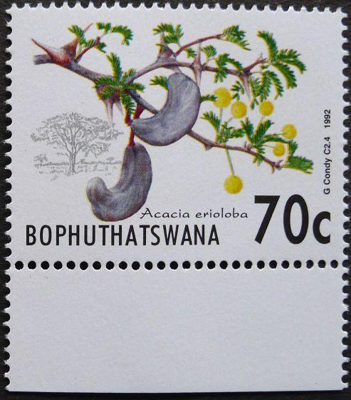 Bophuthatswana, Acacia erioloba, 1992