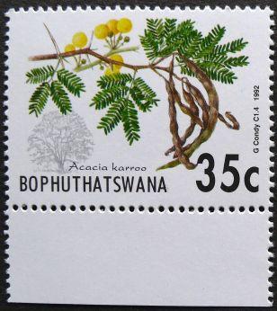 Bophuthatswana, Acacia karroo, 1992