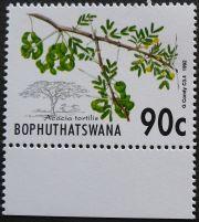 Bophuthatswana, Acacia tortilis, 1992