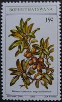 Bophuthatswana, Bequaertiodendron magalismontanum artist: Dick Findlay, 1980