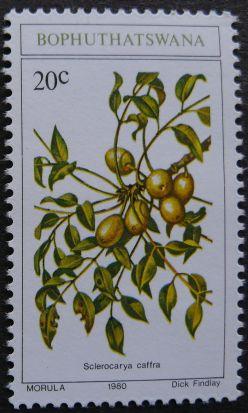 Bophuthatswana, Sclerocarya caffra, artist: Dick Findlay, 1980