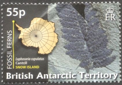 British Antarctic Territory - fossil plants, Lophosora cupulatus
