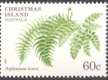 Christmas Island - ferns, Asplenium listeri
