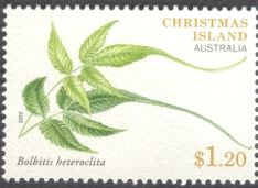 Christmas Island - ferns, Bolbitis heteroclita