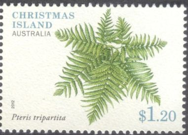 Christmas Island - ferns, Pteris tripartita