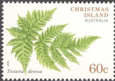 Christmas Island - ferns, Tectaria divexa