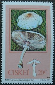 Ciskei, Edible Mushrooms, Macrolepiota zeyheri, 1987