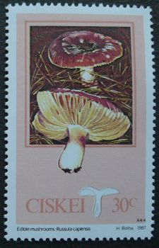 Ciskei, Edible Mushrooms, Russula capensis, 1987