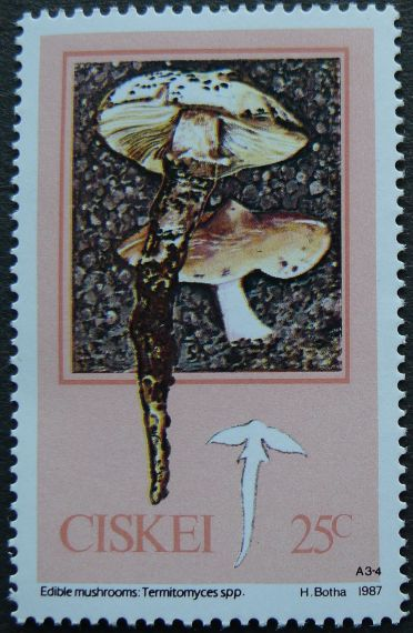 Ciskei, Edible Mushrooms, Termitomyceas spp., 1987