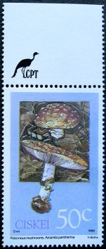 Ciskei, Poisonous mushrooms, Amanita pantherita, 1988