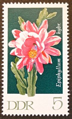 East Germany - flowers - Epiphyllum hybrid