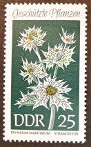 East Germany - flowers - Eryngium maritimum