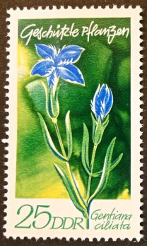 East Germany - flowers - Gentiana ciliata