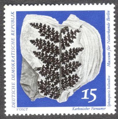 East Germany, fossil ferns - Sphenopteris hollandica