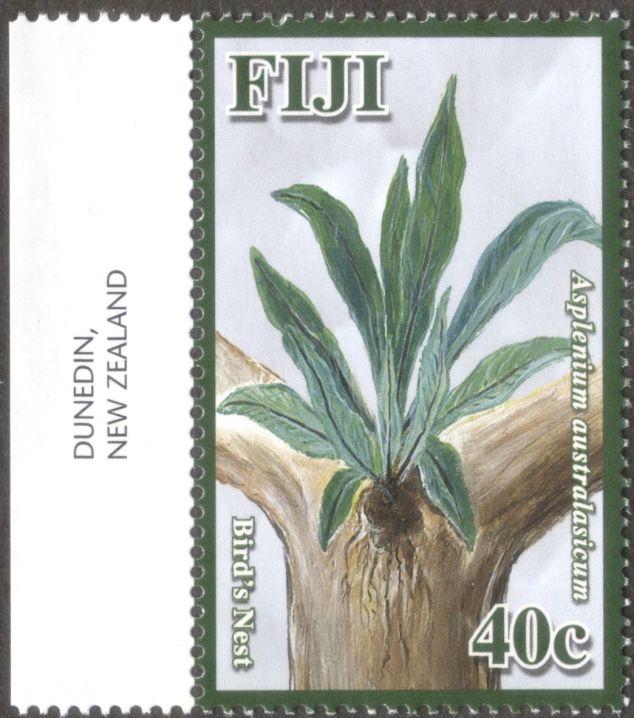 Fiji, ferns, Bird's Nest fern, Asplenium australasicum