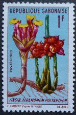 Gabon, Aframomum polyanthum, 1969