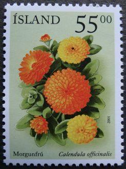 Iceland, Calendula officinalis, 2001
