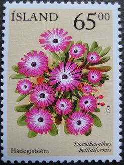 Iceland, an ice plant, Dorotheanthus bellidiformis, 2001
