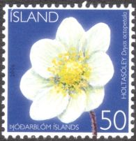 Iceland: national flower, Dryas octopetala, 2006