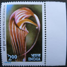 India, Arisaema wallachianum, 1982