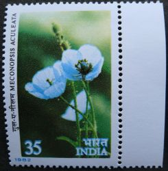 India, Meconopsis aculeata, 1982