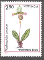 India, orchids, Paphiopedilum venustum, 1991