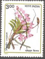 India, orchids, Aerides crispum, 1991