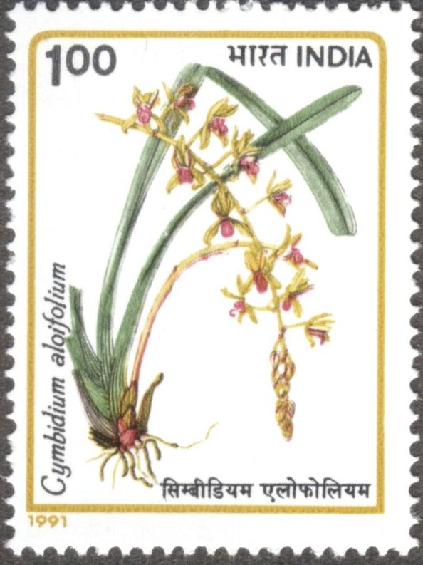 India, orchids, Cymbidium aloifolium, 1991