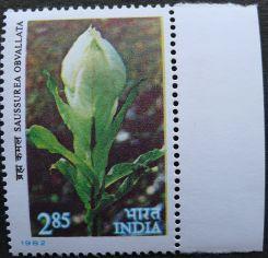 India, Saussurea obvallata, 1982
