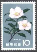 Japan, flowers, Camellia japonica