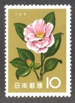 Japan, flowers, Camellia reticulata