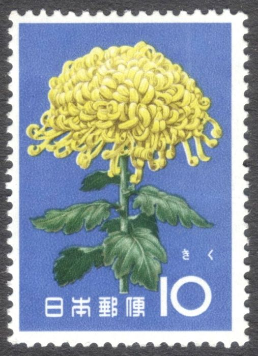 Japan, flowers, Chrysanthemum