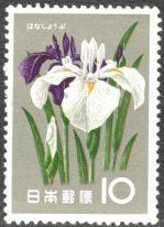 Japan, flowers, Japanese iris
