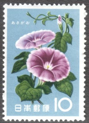 Japan, flowers, Morning glory