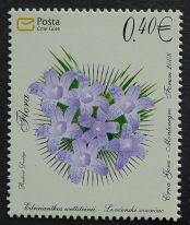 Montenegro, flora, Edraianthus wettsteinii, 2008