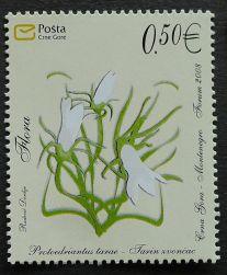 Montenegro, flora, Protoedriantus tarae, 2008