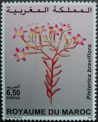 Morocco, flora, Pistorica breviflora, 2000. Morocco does not have a national flower.